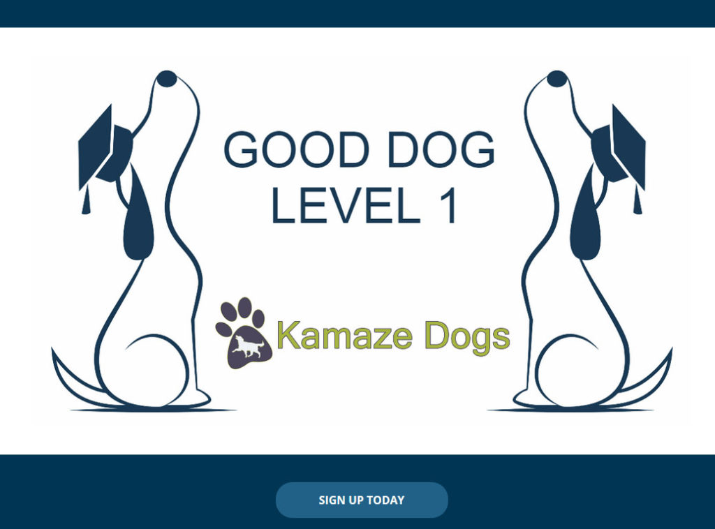 Good Dog Level 1 online training course