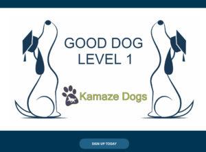 Good Dog Level 1 online training course